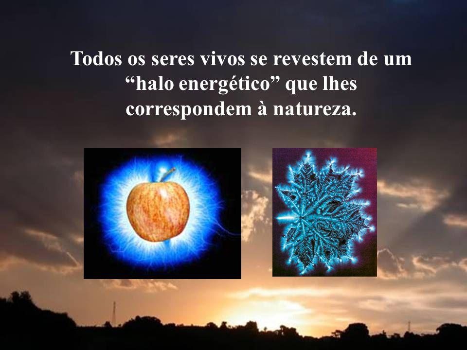 """Todos os seres vivos se revestem de um """"halo energético"""" que lhes correspondem à natureza."""