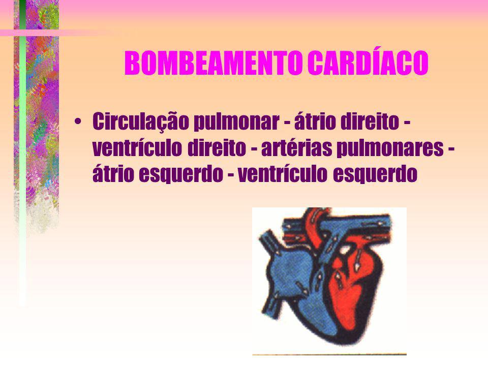 BOMBEAMENTO CARDÍACO Circulação pulmonar - átrio direito - ventrículo direito - artérias pulmonares - átrio esquerdo - ventrículo esquerdo