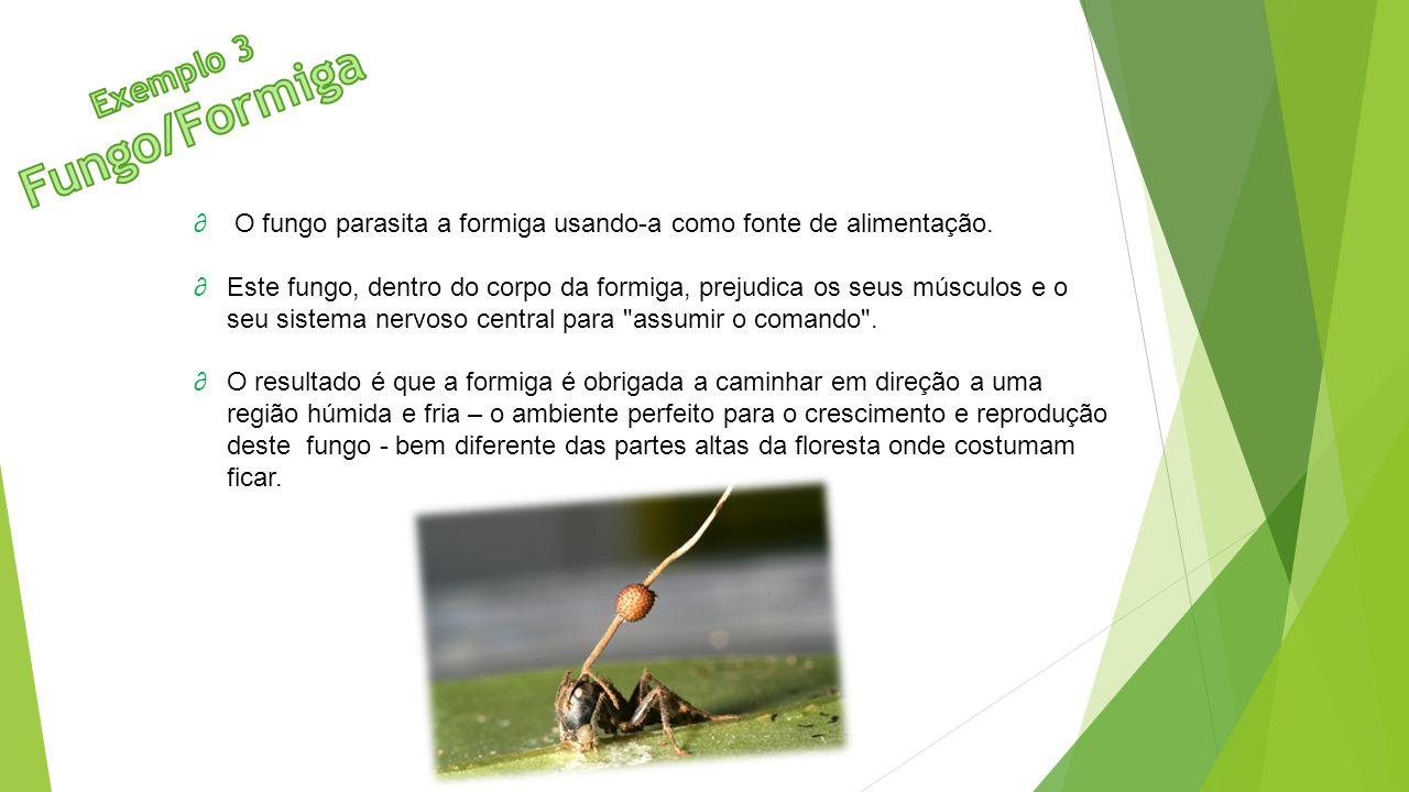 ∂ O fungo parasita a formiga usando-a como fonte de alimentação. ∂Este fungo, dentro do corpo da formiga, prejudica os seus músculos e o seu sistema n