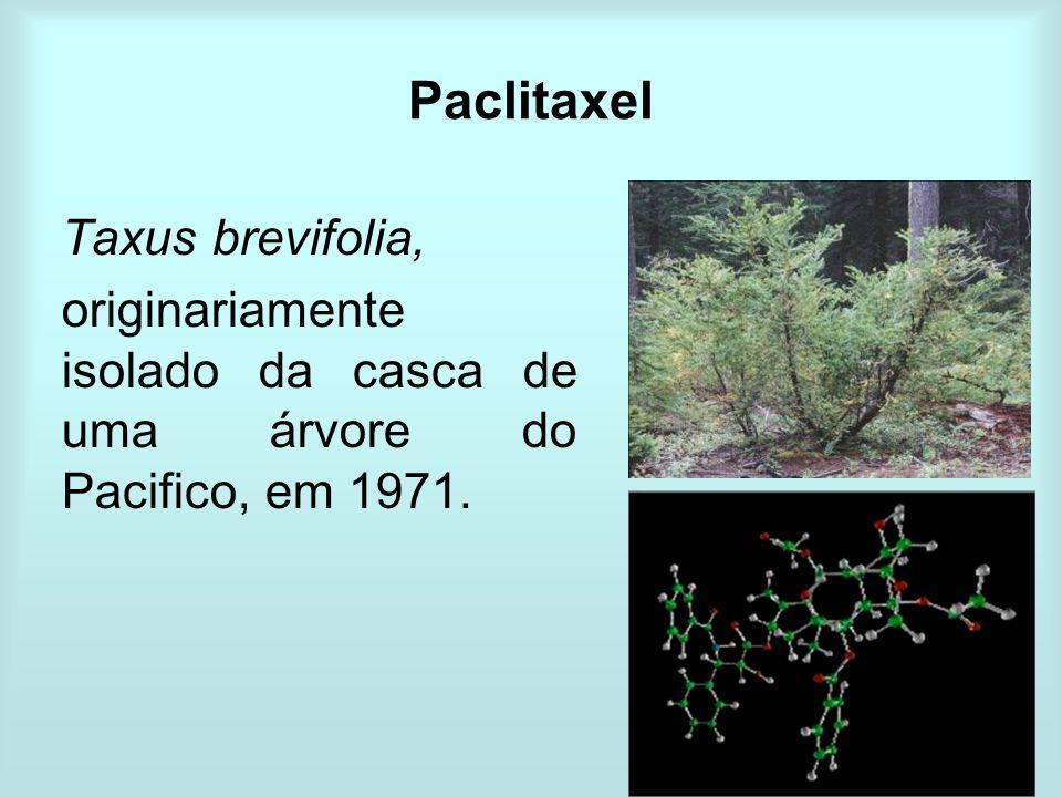 Paclitaxel Taxus brevifolia, originariamente isolado da casca de uma árvore do Pacifico, em 1971.