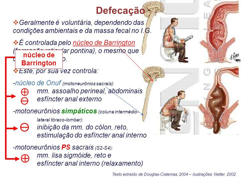 Defecação: o reflexo gastrocólico Despopoulos´s Color Atlas of Physiology, 2003 Thieme