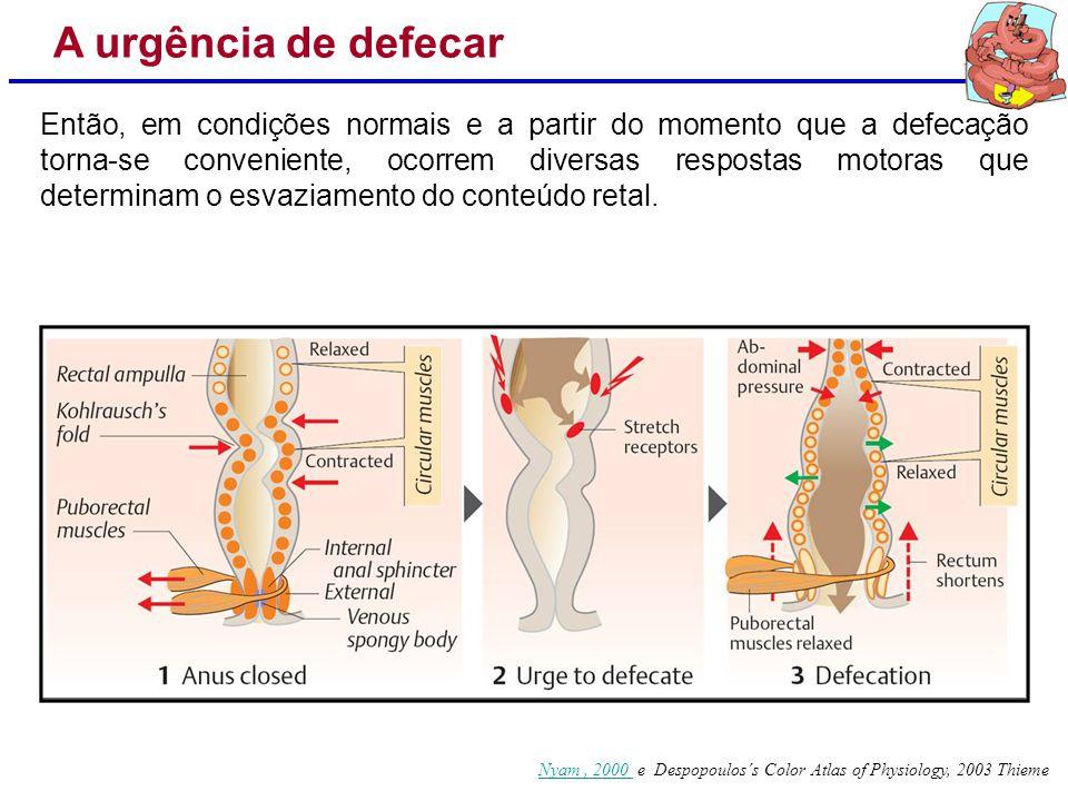 Nyam, 2000 Nyam, 2000 e Despopoulos´s Color Atlas of Physiology, 2003 Thieme A urgência de defecar Em doenças inflamatórias nas quais há a perda dessa