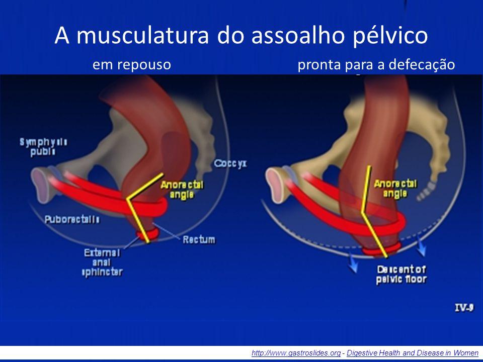Se a ocasião não for conveniente socialmente, a defecação pode ser voluntariamente interrompida pela contração dos músculos puboretais e EAE. O conteú