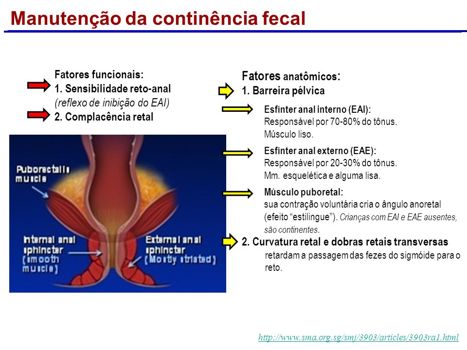 http://www.gastroslides.orghttp://www.gastroslides.org - Digestive Health and Disease in WomenDigestive Health and Disease in Women A musculatura do a