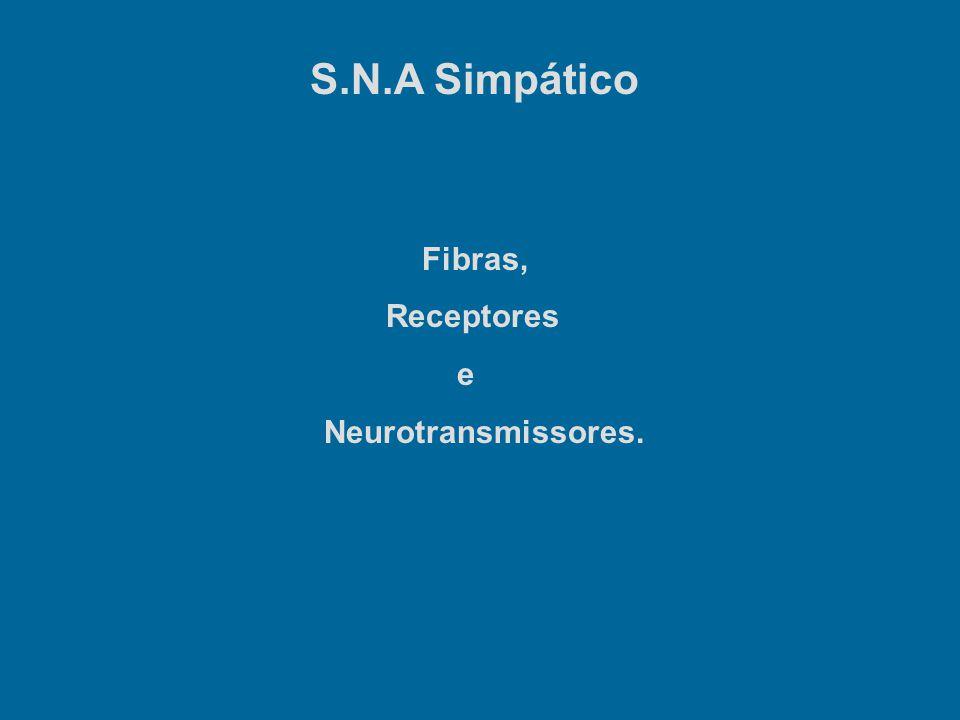 S.N.A Simpático Fibras, Receptores e Neurotransmissores.