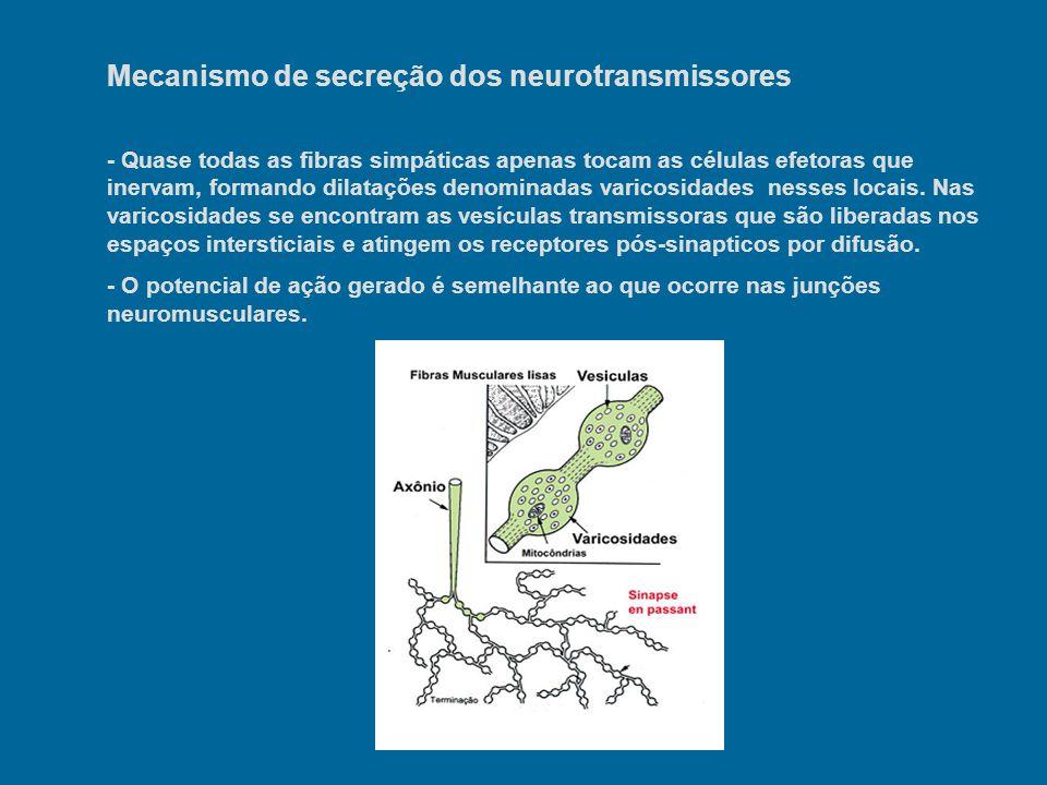 Mecanismo de secreção dos neurotransmissores - Quase todas as fibras simpáticas apenas tocam as células efetoras que inervam, formando dilatações deno