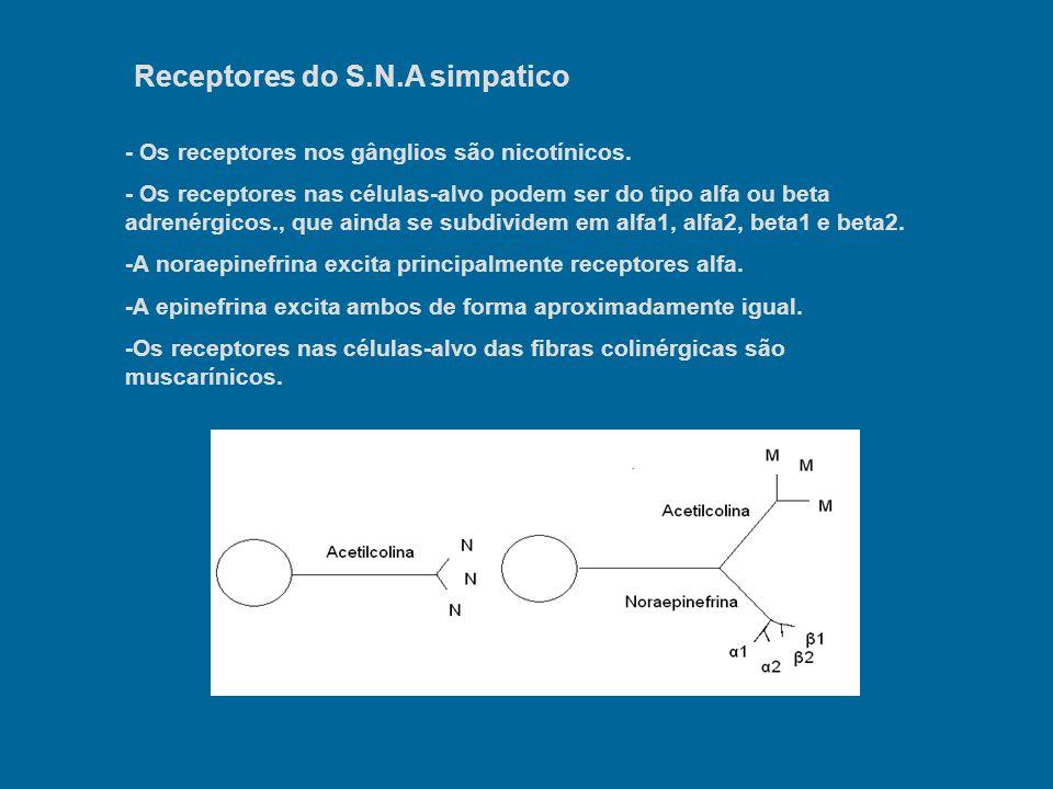 Receptores do S.N.A simpatico - Os receptores nos gânglios são nicotínicos. - Os receptores nas células-alvo podem ser do tipo alfa ou beta adrenérgic
