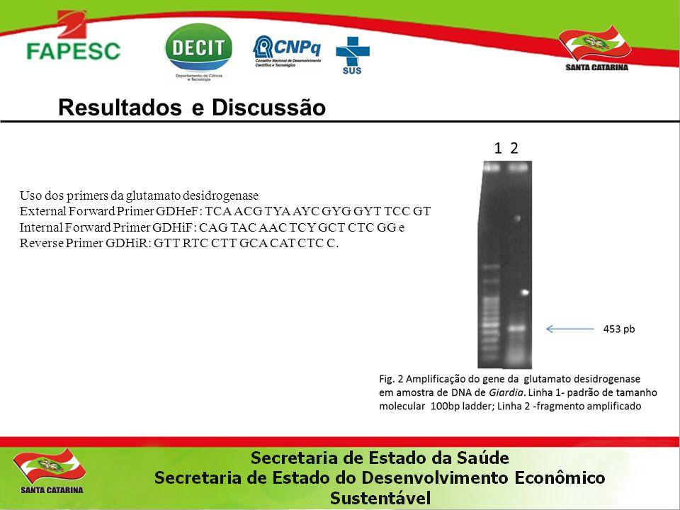 Resultados e Discussão Uso dos primers da glutamato desidrogenase External Forward Primer GDHeF: TCA ACG TYA AYC GYG GYT TCC GT Internal Forward Prime