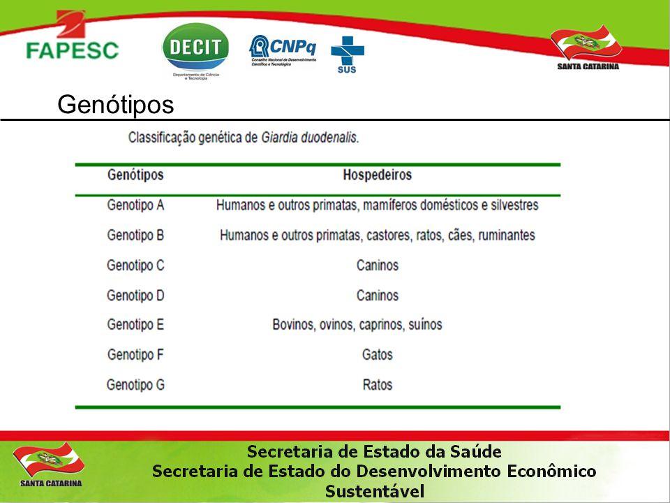 Objetivos GERAL : Determinar o genótipo de Giardia sp em fezes de crianças,cães e animais de produção residentes na região periférica da cidade de Lages, SC.