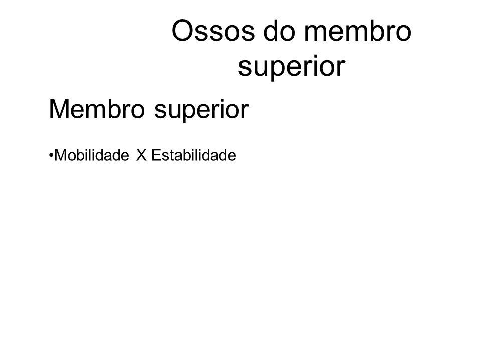 Ossos do membro superior Membro superior Mobilidade X Estabilidade