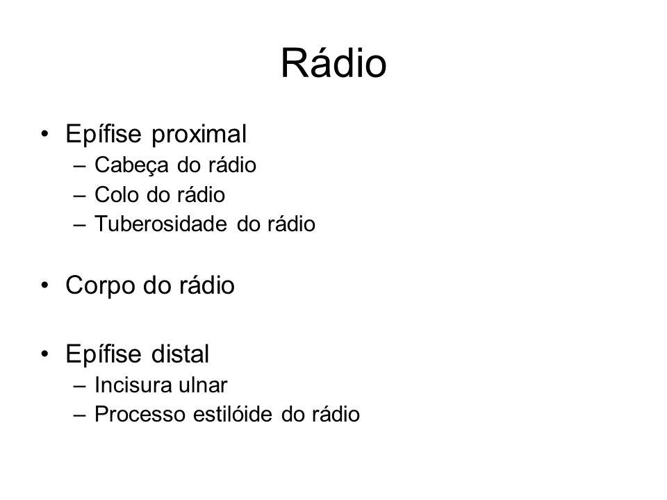 Rádio Epífise proximal –Cabeça do rádio –Colo do rádio –Tuberosidade do rádio Corpo do rádio Epífise distal –Incisura ulnar –Processo estilóide do rád