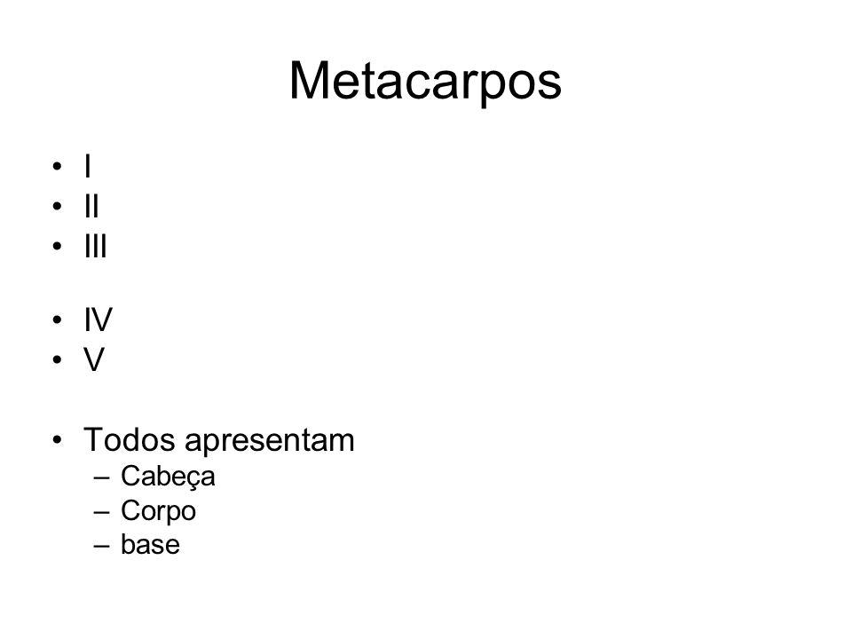 Metacarpos I II III IV V Todos apresentam –Cabeça –Corpo –base