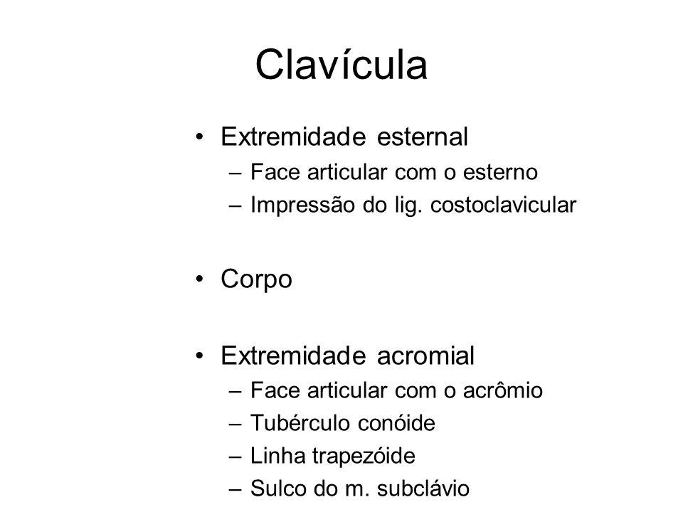 Clavícula Extremidade esternal –Face articular com o esterno –Impressão do lig. costoclavicular Corpo Extremidade acromial –Face articular com o acrôm
