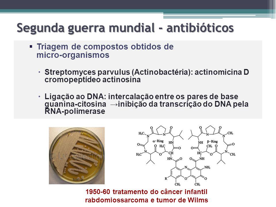 Segunda guerra mundial - antibióticos   Triagem de compostos obtidos de micro-organismos   Streptomyces parvulus (Actinobactéria): actinomicina D