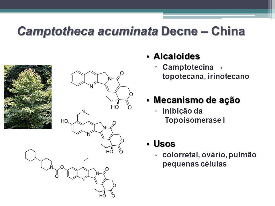 Camptotheca acuminata Decne – China Alcaloides Alcaloides ▫ ▫ Camptotecina → topotecana, irinotecano Mecanismo de ação Mecanismo de ação ▫ ▫ inibição