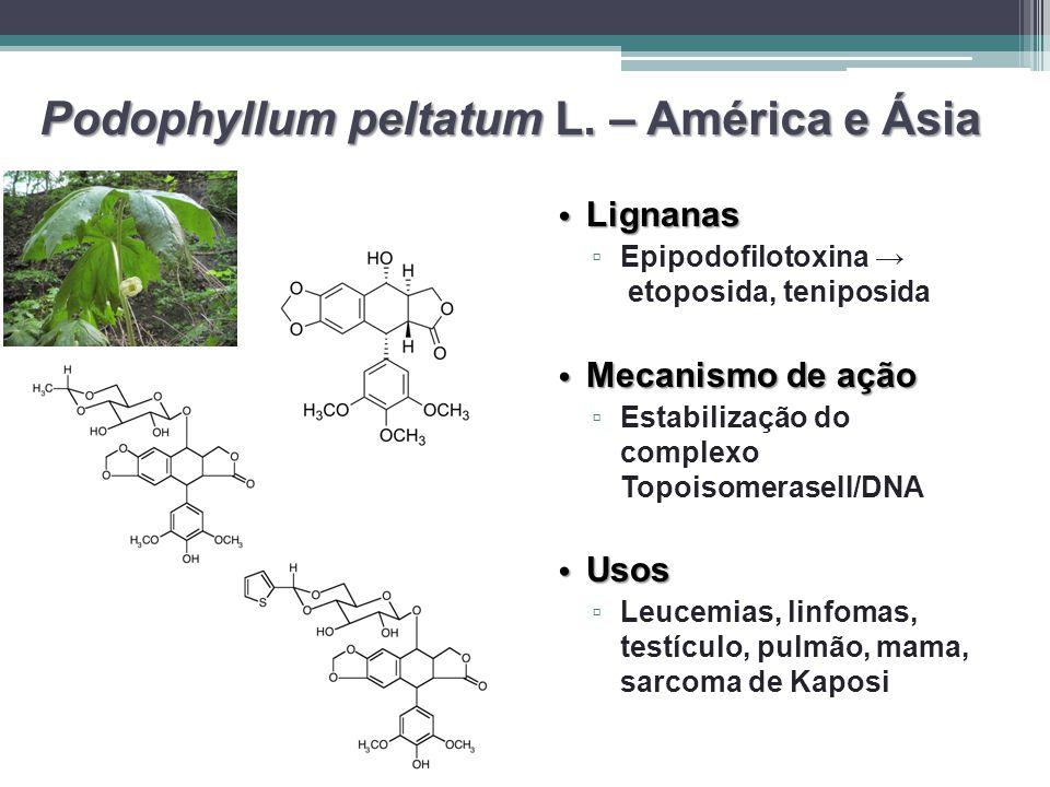 Podophyllum peltatum L. – América e Ásia Lignanas Lignanas ▫ ▫ Epipodofilotoxina → etoposida, teniposida Mecanismo de ação Mecanismo de ação ▫ ▫ Estab