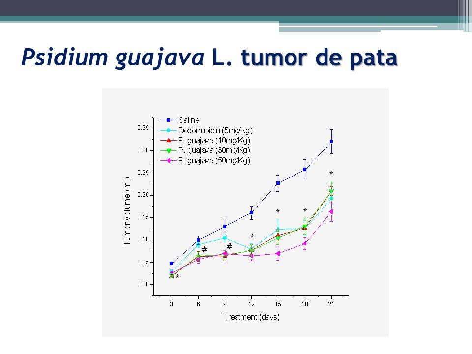tumor de pata Psidium guajava L. tumor de pata