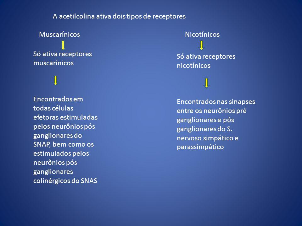 A acetilcolina ativa dois tipos de receptores Muscarínicos Nicotínicos Só ativa receptores muscarínicos Encontrados em todas células efetoras estimula