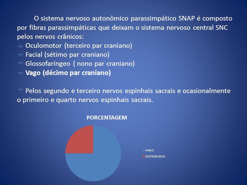 O sistema nervoso autonômico parassimpático SNAP é composto por fibras parassimpáticas que deixam o sistema nervoso central SNC pelos nervos crânicos:
