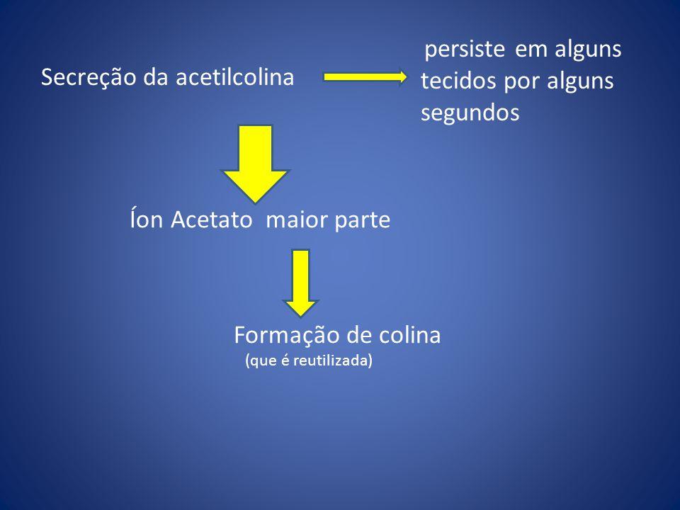 Secreção da acetilcolina Íon Acetato maior parte Formação de colina (que é reutilizada) persiste em alguns tecidos por alguns segundos