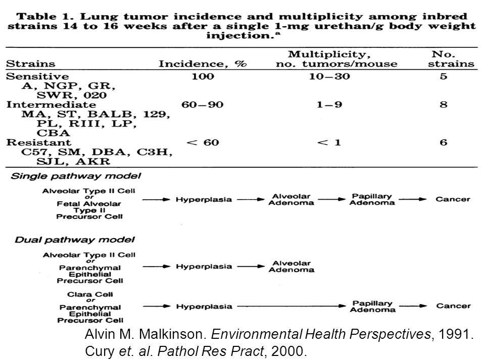 Alvin M. Malkinson. Environmental Health Perspectives, 1991. Cury et. al. Pathol Res Pract, 2000.