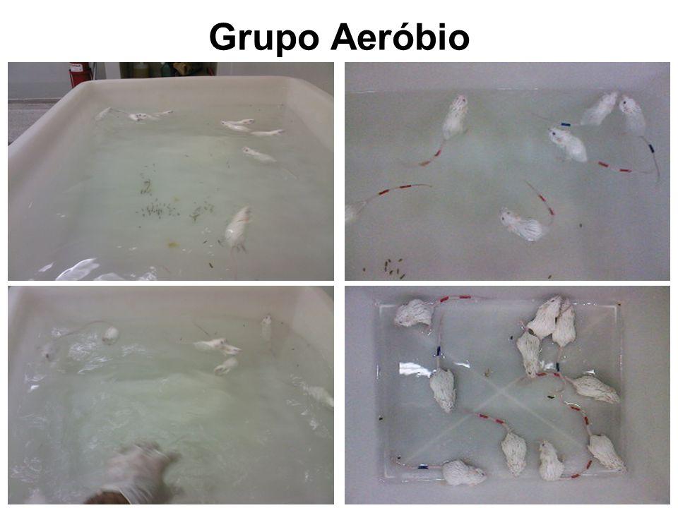 Grupo Aeróbio