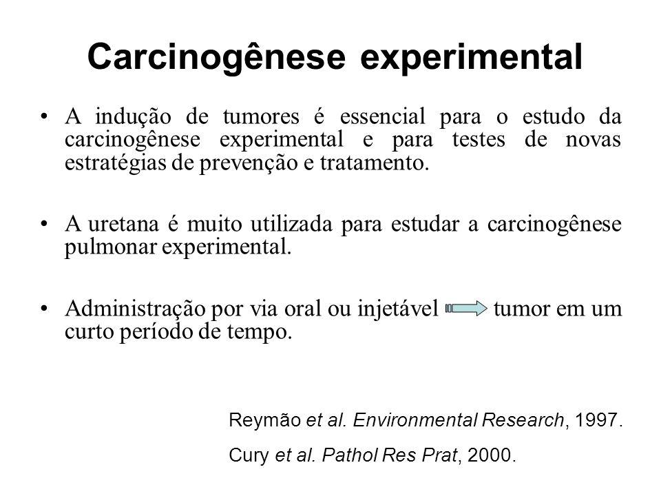 Diferentes cepas de camundongos variam na sensibilidade de desenvolver tumores pulmonares.