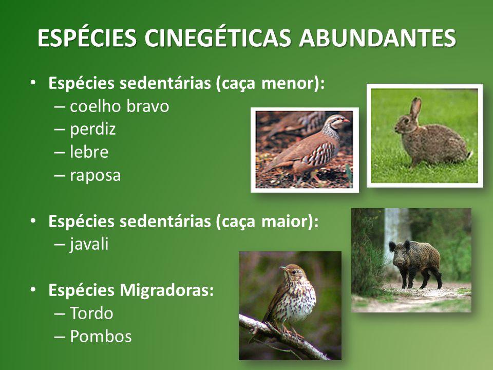 ESPÉCIES CINEGÉTICAS ABUNDANTES Espécies sedentárias (caça menor): – coelho bravo – perdiz – lebre – raposa Espécies sedentárias (caça maior): – javal