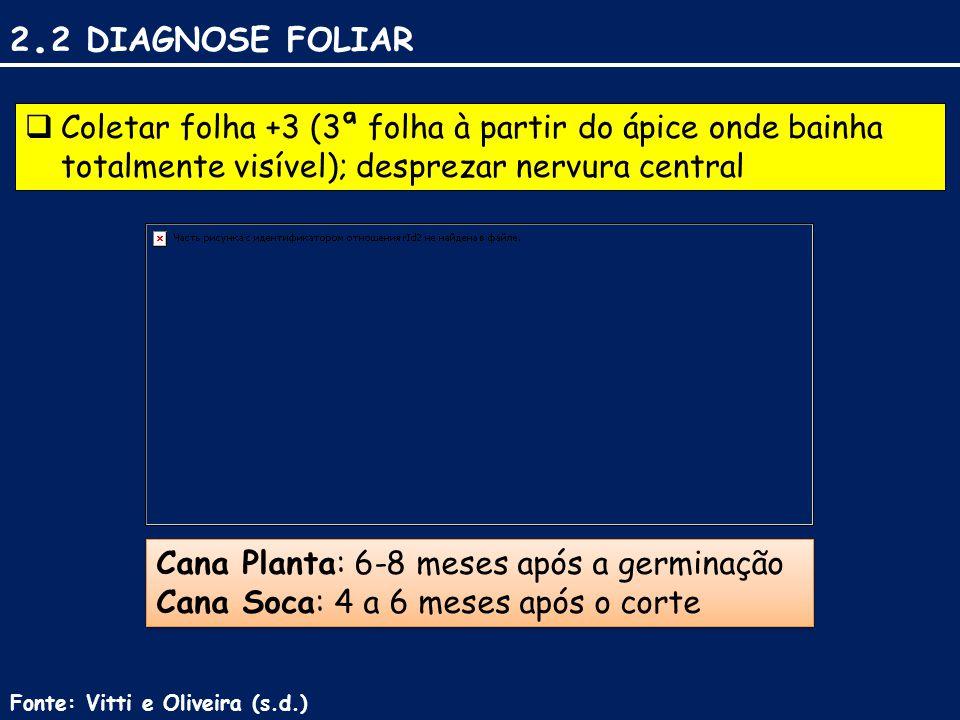 2. 2 DIAGNOSE FOLIAR  Coletar folha +3 (3ª folha à partir do ápice onde bainha totalmente visível); desprezar nervura central Cana Planta: 6-8 meses