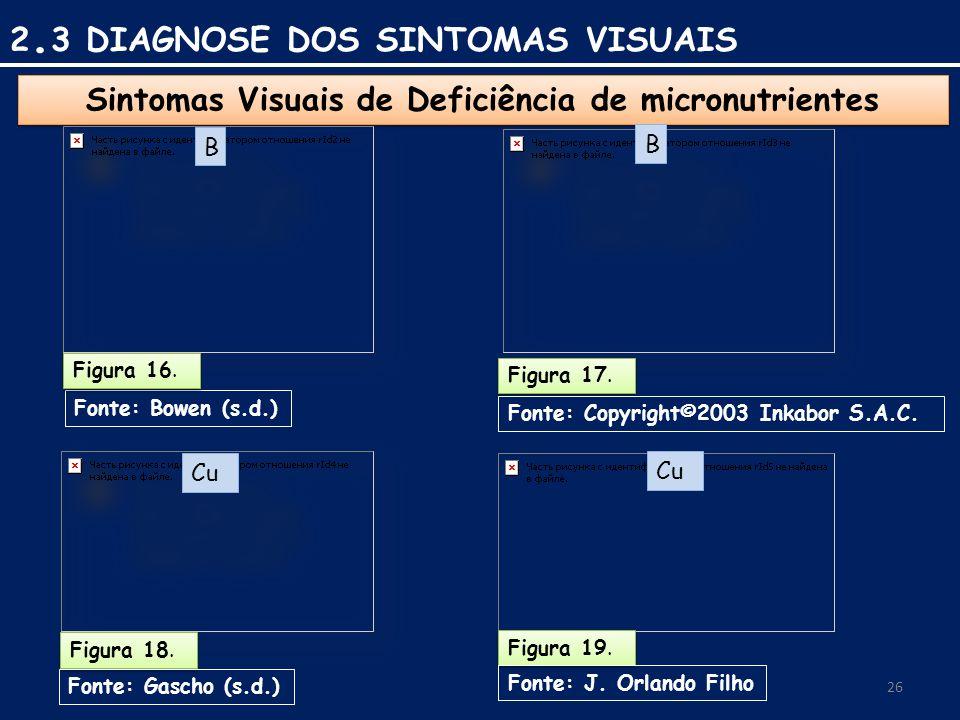 26 Sintomas Visuais de Deficiência de micronutrientes Fonte: Bowen (s.d.) Figura 16.
