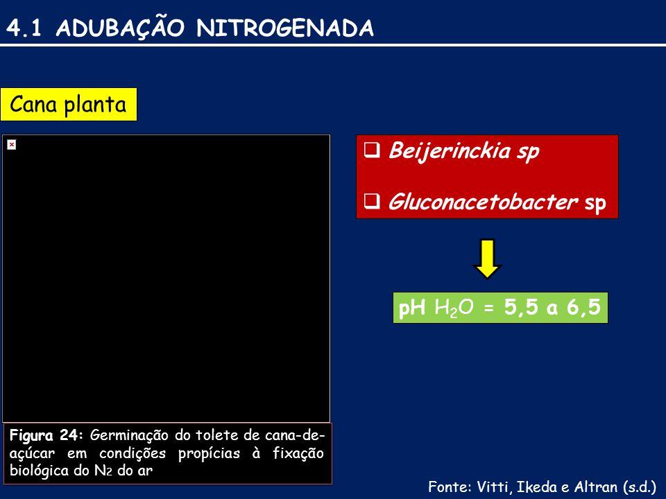 Beijerinckia sp Gluconacetobacter sp 4.1 ADUBAÇÃO NITROGENADA Cana planta Figura 24: Germinação do tolete de cana-de- açúcar em condições propícias à fixação biológica do N 2 do ar  Beijerinckia sp  Gluconacetobacter sp pH H 2 O = 5,5 a 6,5 Fonte: Vitti, Ikeda e Altran (s.d.)