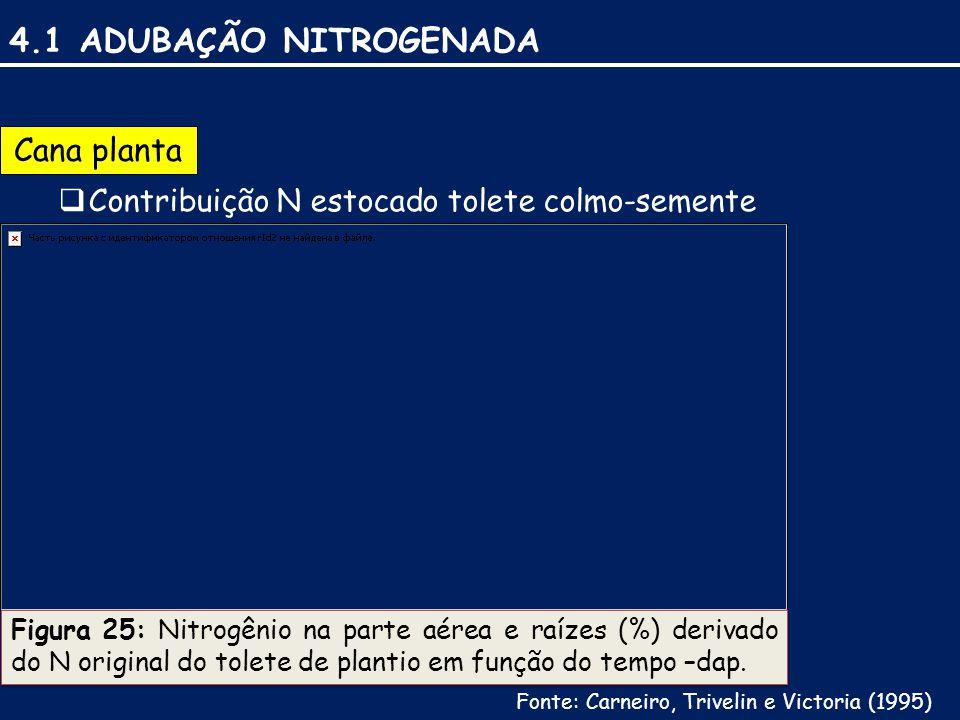 4.1 ADUBAÇÃO NITROGENADA Cana planta  Contribuição N estocado tolete colmo-semente Figura 25: Nitrogênio na parte aérea e raízes (%) derivado do N original do tolete de plantio em função do tempo –dap.
