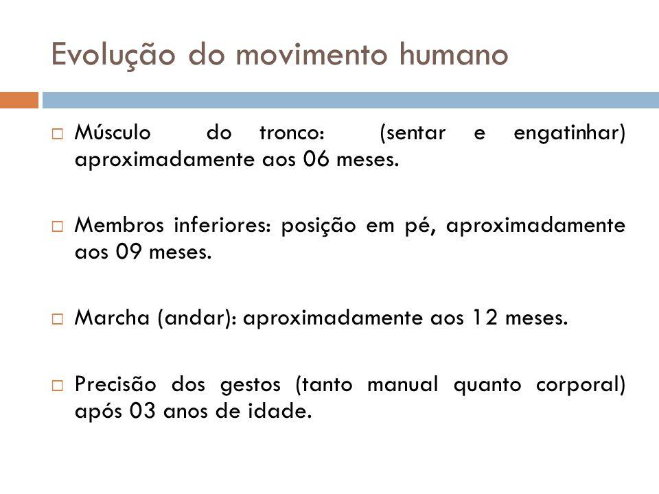Evolução do movimento humano  Músculo do tronco: (sentar e engatinhar) aproximadamente aos 06 meses.