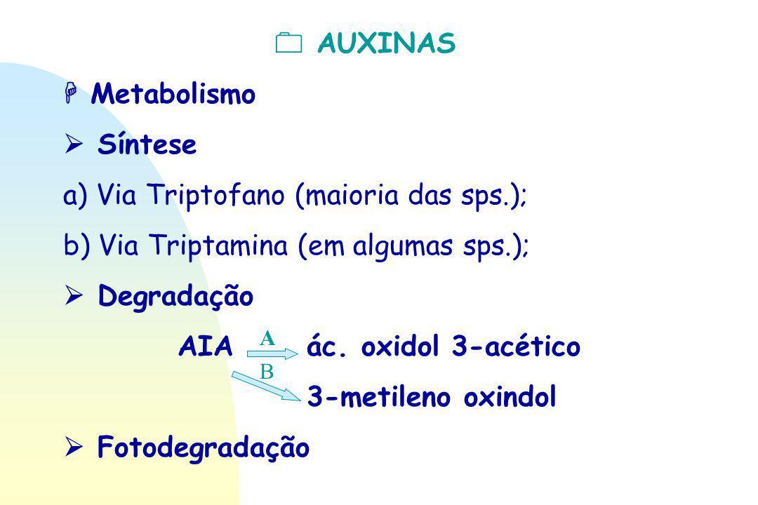  AUXINAS  Metabolismo  Síntese a) Via Triptofano (maioria das sps.); b) Via Triptamina (em algumas sps.);  Degradação AIA ác. oxidol 3-acético 3-m
