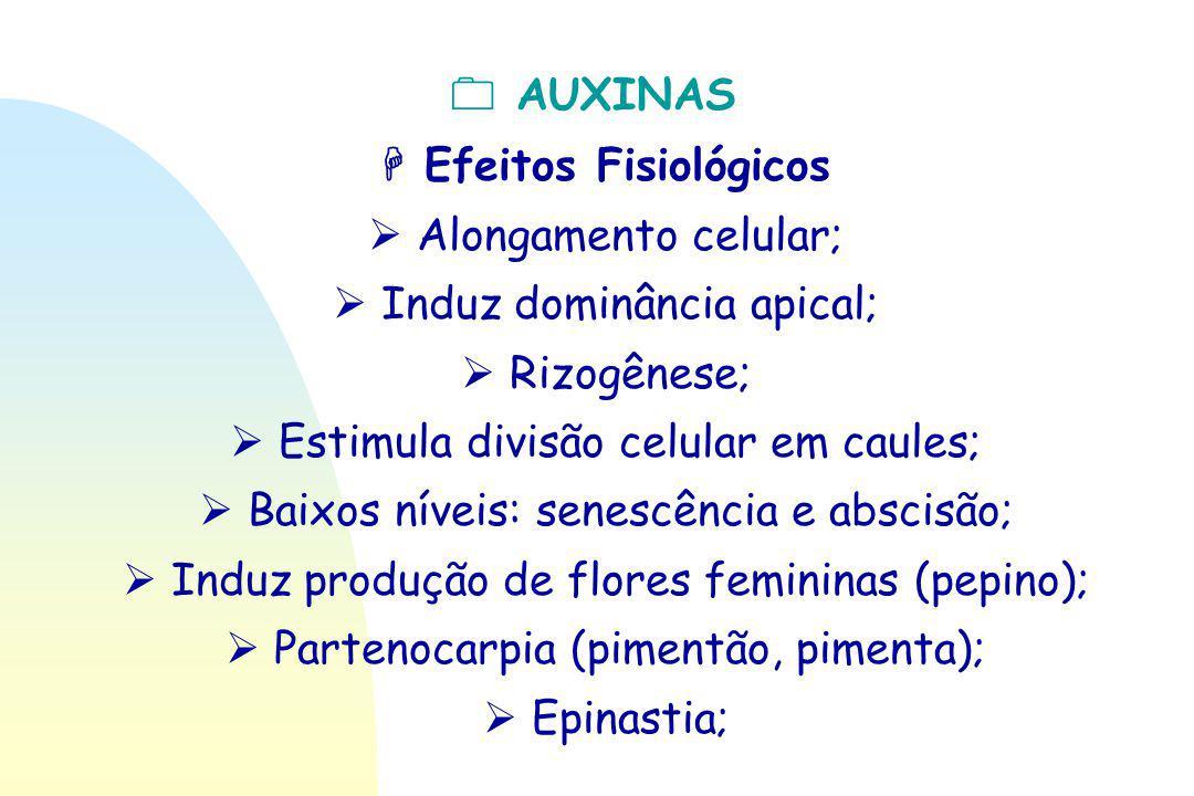  AUXINAS  Efeitos Fisiológicos  Alongamento celular;  Induz dominância apical;  Rizogênese;  Estimula divisão celular em caules;  Baixos níveis