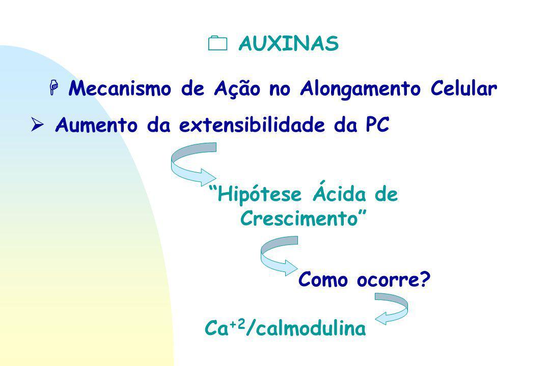 """ AUXINAS  Mecanismo de Ação no Alongamento Celular  Aumento da extensibilidade da PC """"Hipótese Ácida de Crescimento"""" Como ocorre? Ca +2 /calmodulin"""