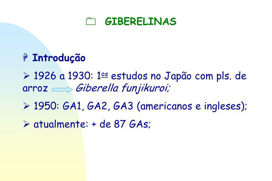  GIBERELINAS  Introdução  1926 a 1930: 1 os estudos no Japão com pls. de arroz Giberella funjikuroi;  1950: GA1, GA2, GA3 (americanos e ingleses);