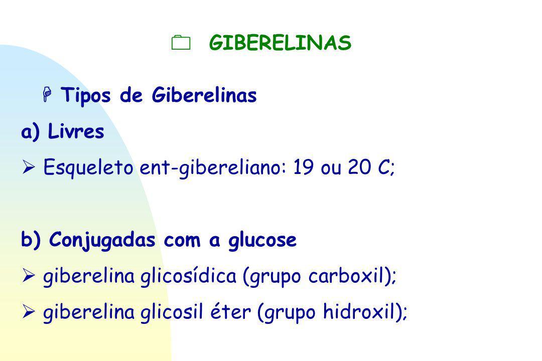  GIBERELINAS  Tipos de Giberelinas a) Livres  Esqueleto ent-gibereliano: 19 ou 20 C; b) Conjugadas com a glucose  giberelina glicosídica (grupo c