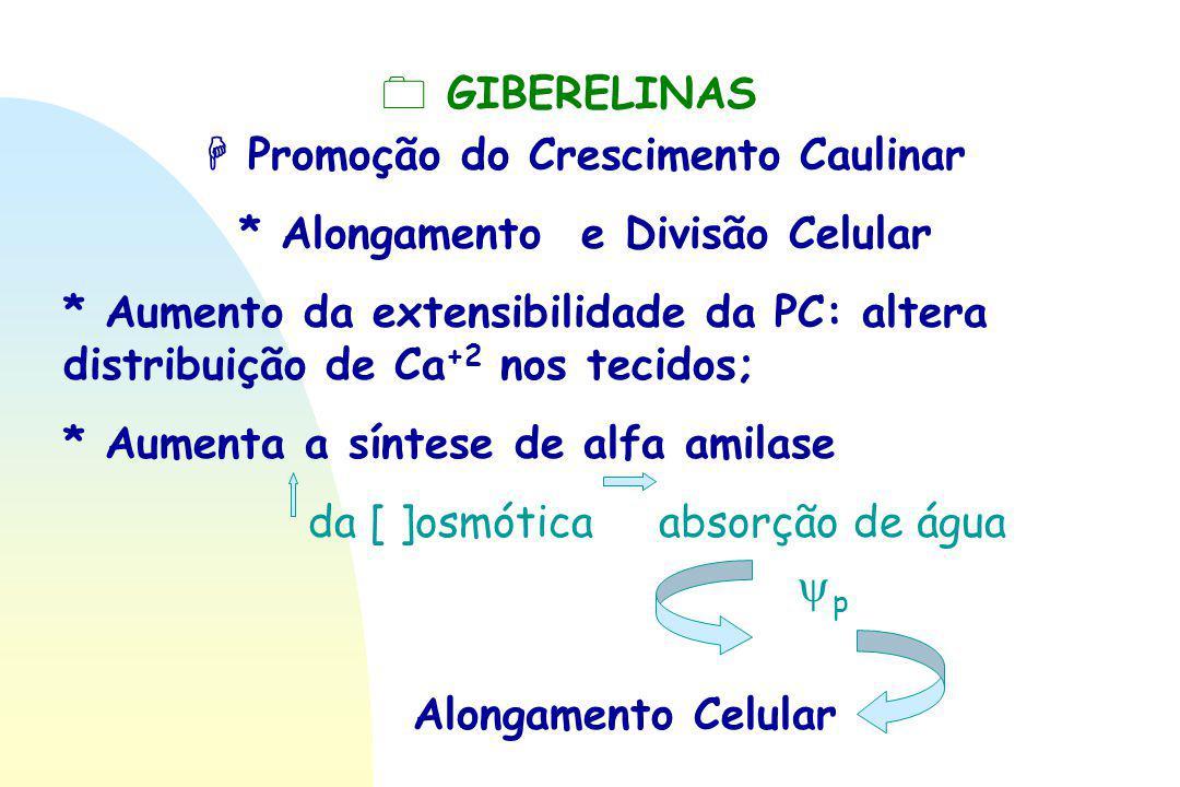 0 GIBERELINAS  Promoção do Crescimento Caulinar * Alongamento e Divisão Celular * Aumento da extensibilidade da PC: altera distribuição de Ca +2 nos