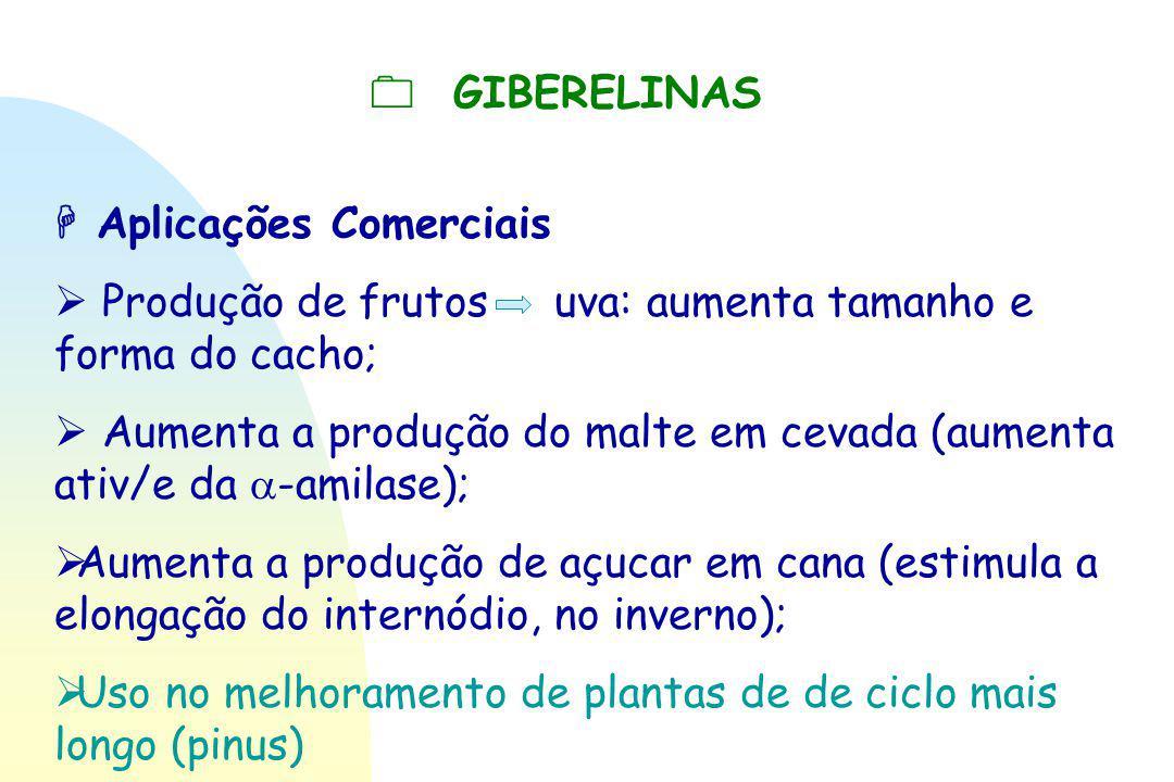  GIBERELINAS  Aplicações Comerciais  Produção de frutos uva: aumenta tamanho e forma do cacho;  Aumenta a produção do malte em cevada (aumenta ati