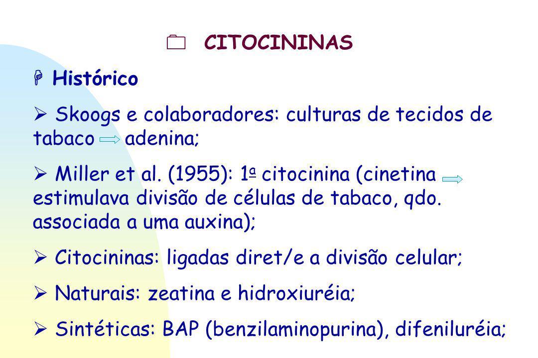  CITOCININAS  Histórico  Skoogs e colaboradores: culturas de tecidos de tabaco adenina;  Miller et al. (1955): 1 a citocinina (cinetina estimulava