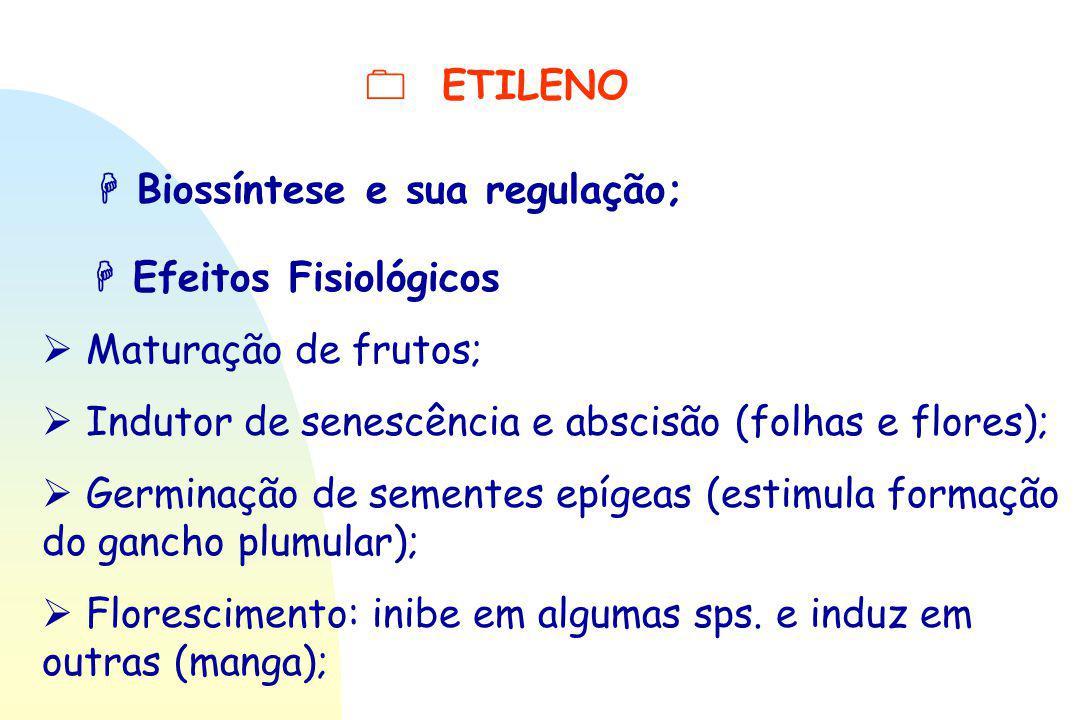  ETILENO  Biossíntese e sua regulação;  Efeitos Fisiológicos  Maturação de frutos;  Indutor de senescência e abscisão (folhas e flores);  Germin