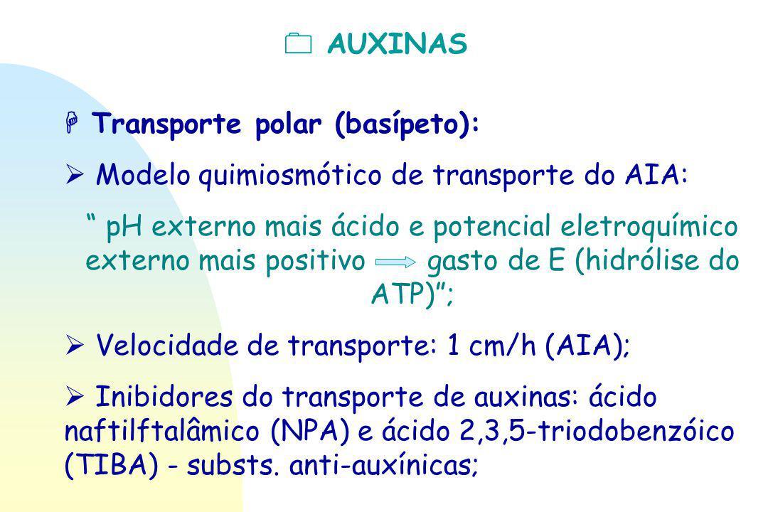 """ AUXINAS  Transporte polar (basípeto):  Modelo quimiosmótico de transporte do AIA: """" pH externo mais ácido e potencial eletroquímico externo mais p"""