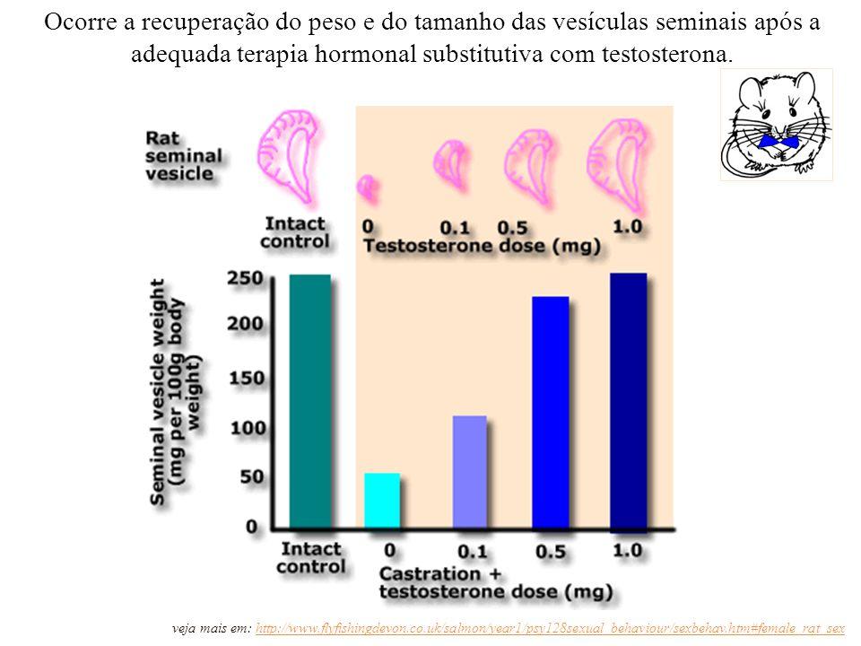 http://salmon.psy.plym.ac.uk Ocorre a recuperação do peso e do tamanho das vesículas seminais após a adequada terapia hormonal substitutiva com testosterona.