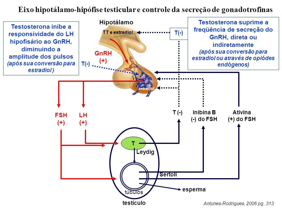 Eixo hipotálamo-hipófise testicular e controle da secreção de gonadotrofinas Leydig T túbulos T (-) TT e estradiol Hipotálamo FSH (+) LH (+) Ativina (+) do FSH esperma testículo Antunes-Rodrigues, 2006 pg.