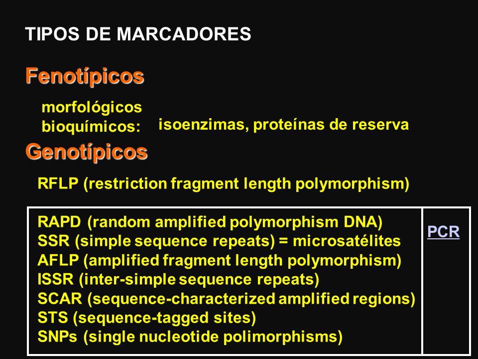 Idéias iniciais Dependendo do marcador, usa-se o polímero mais adequado. RFLP e RAPD – agarose Microsatélites e AFLPs – geram fragmentos menores – pol