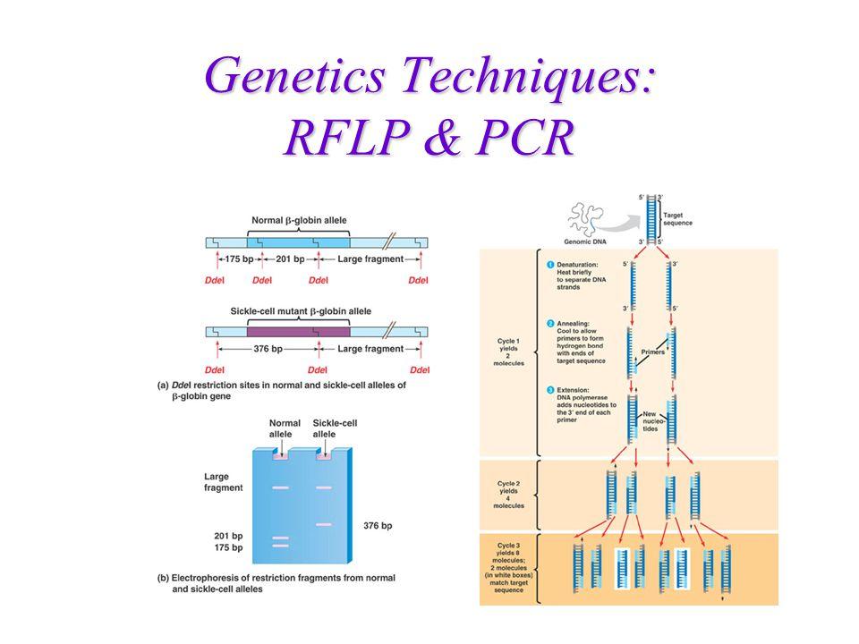 Locos RFLP Uma análise de RFLP é uma aplicação da técnica de Southern. Clones, Enzimas e hibridizações informativas Marcadores RFLP são definidos por