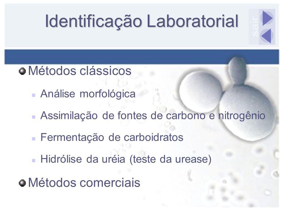 Identificação Laboratorial Métodos clássicos Análise morfológica Assimilação de fontes de carbono e nitrogênio Fermentação de carboidratos Hidrólise d