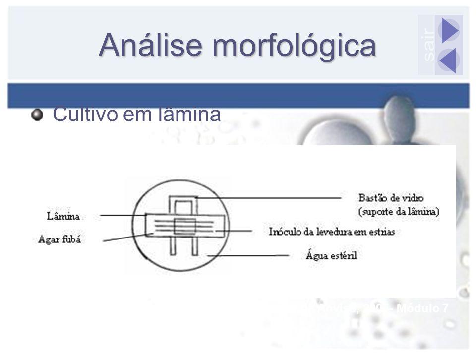 Análise morfológica Cultivo em lâmina Fonte: Manual da Anvisa, 2005- Módulo 7