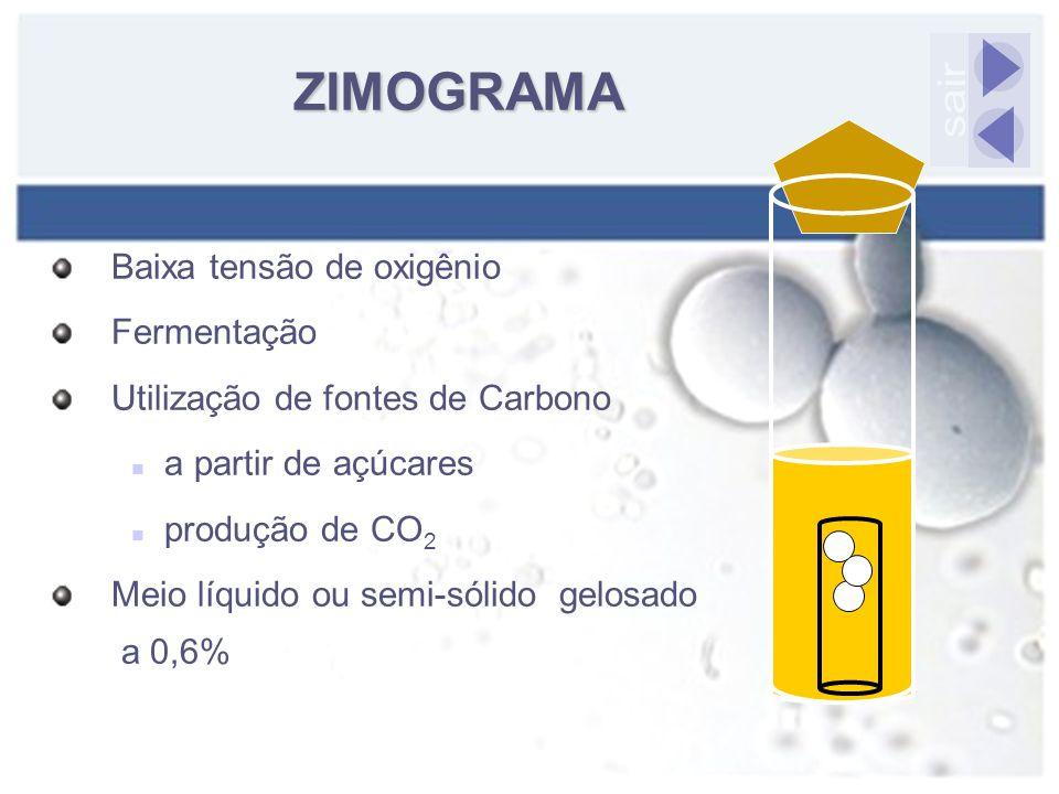 Baixa tensão de oxigênio Fermentação Utilização de fontes de Carbono a partir de açúcares produção de CO 2 Meio líquido ou semi-sólido gelosado a 0,6%
